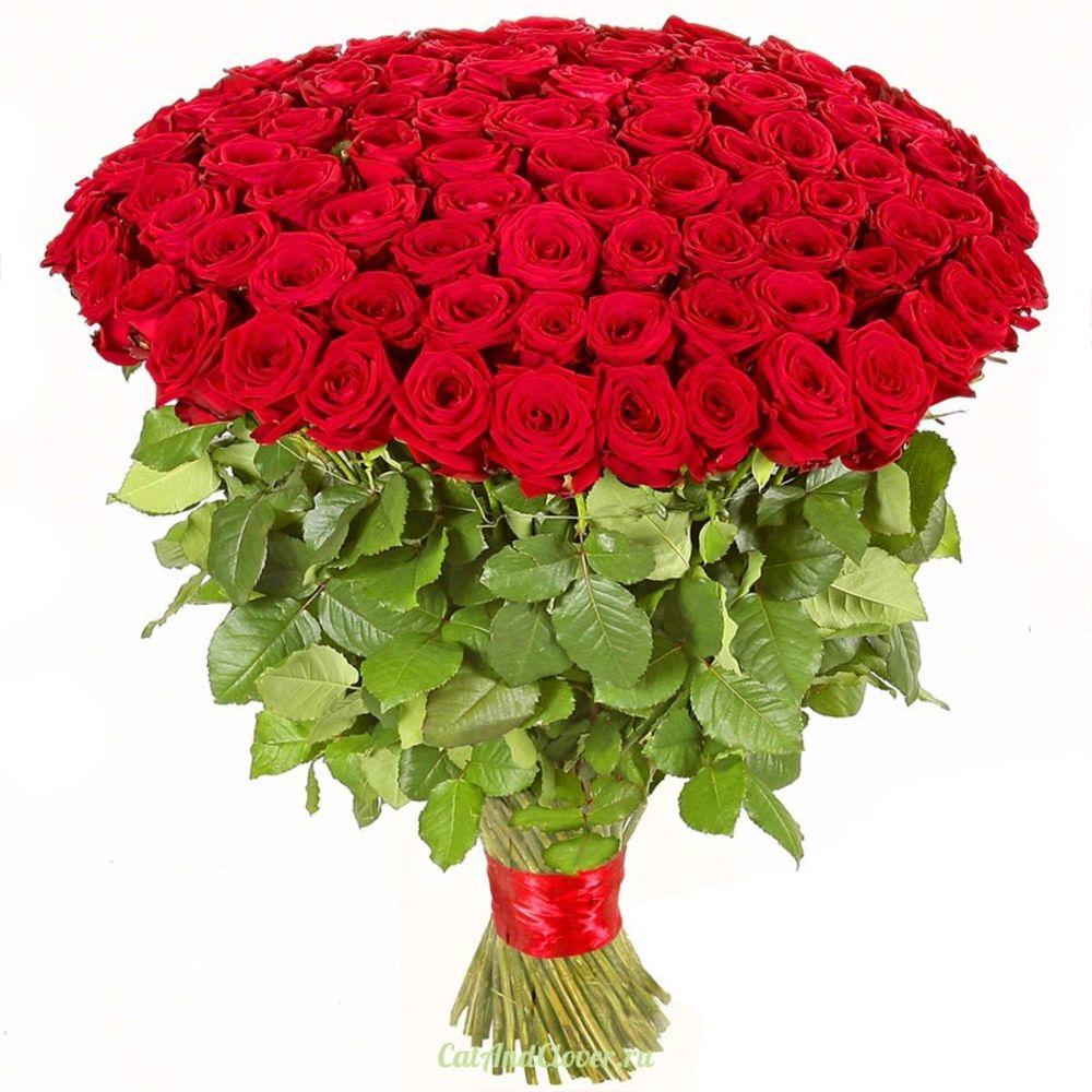 Розы свадебные, картинки букет роз большой фото