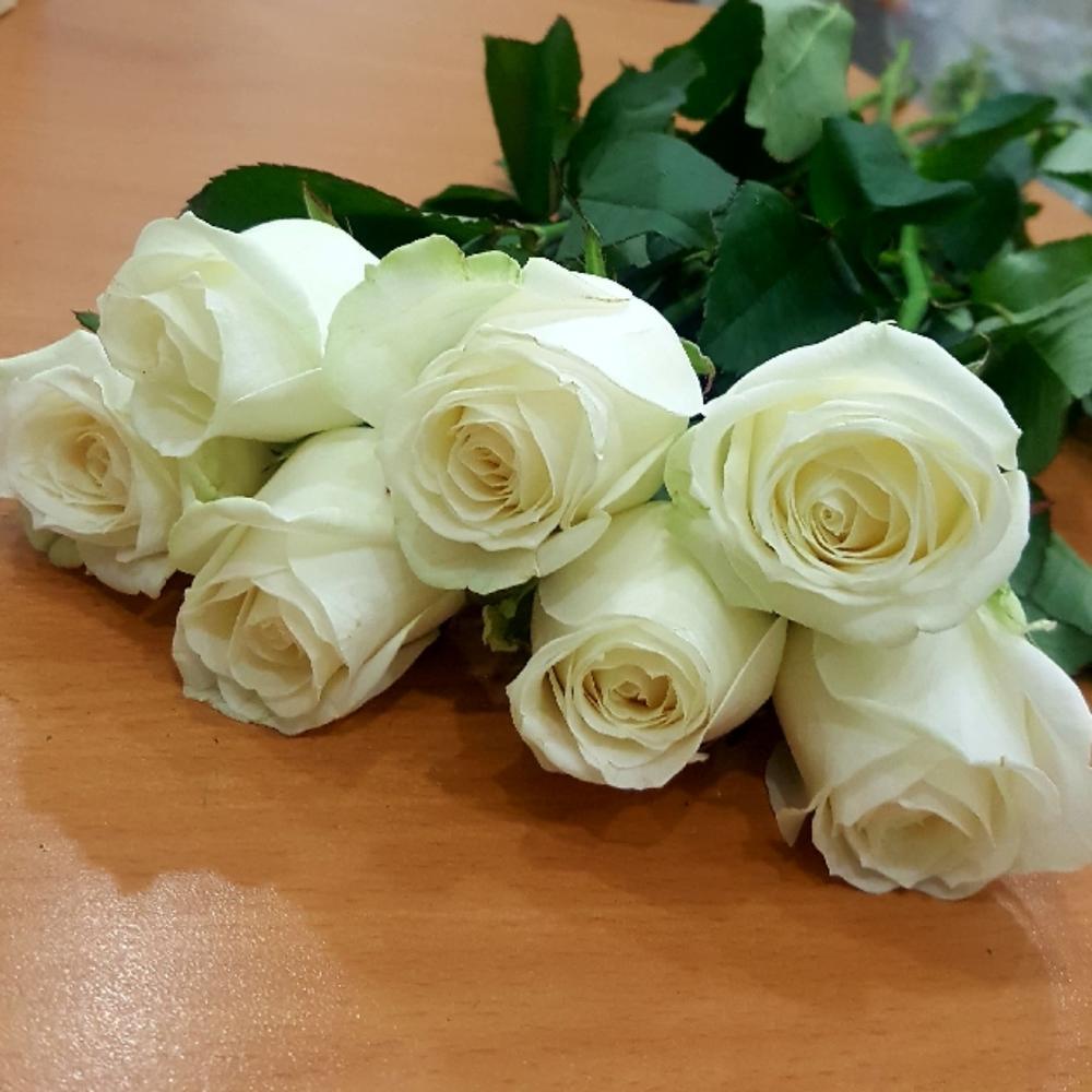 Ромашек, подарить букет белых роз фото