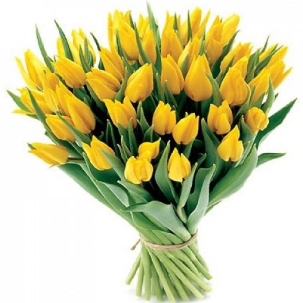 Картинки с желтыми тюльпанами