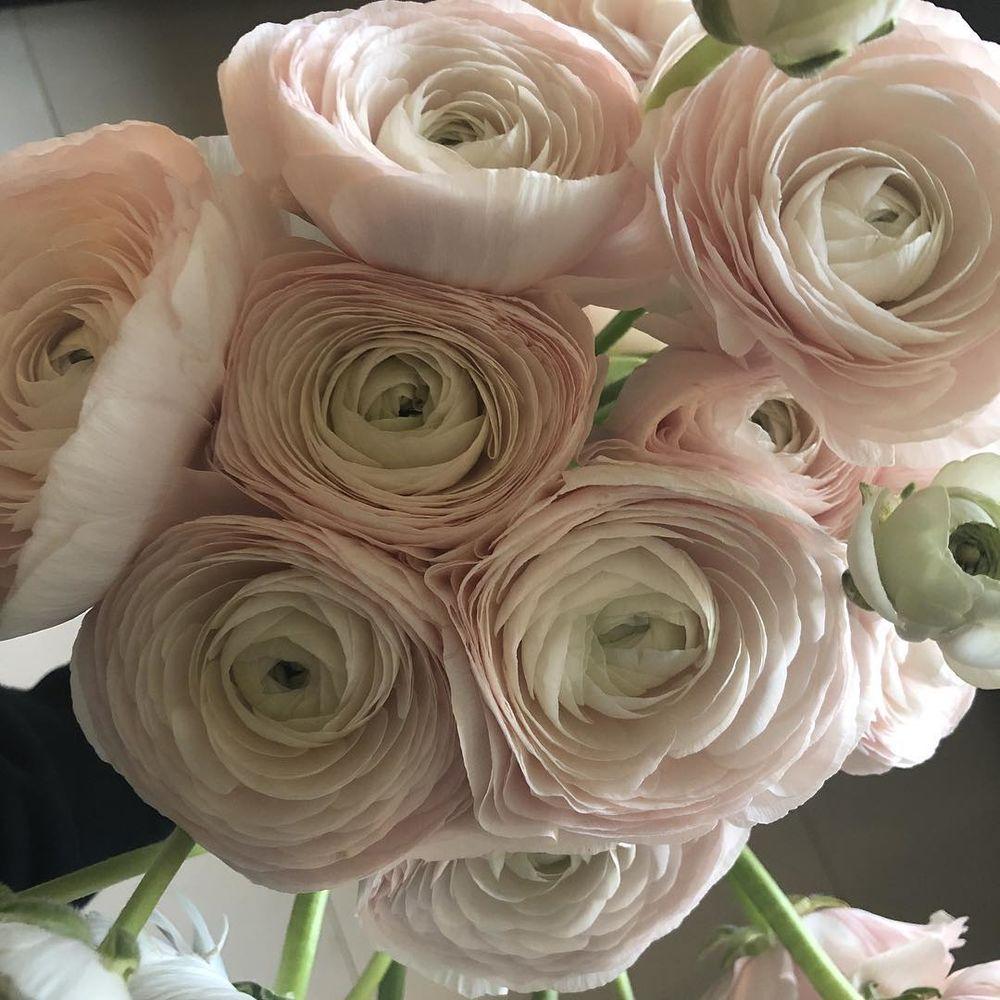 Цветы букеты ранункулюсы цена, цветы ахтубинск доставка