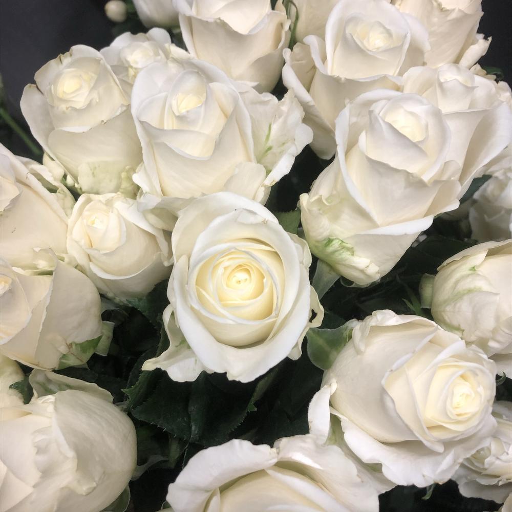 венделла роза фото грива хвост