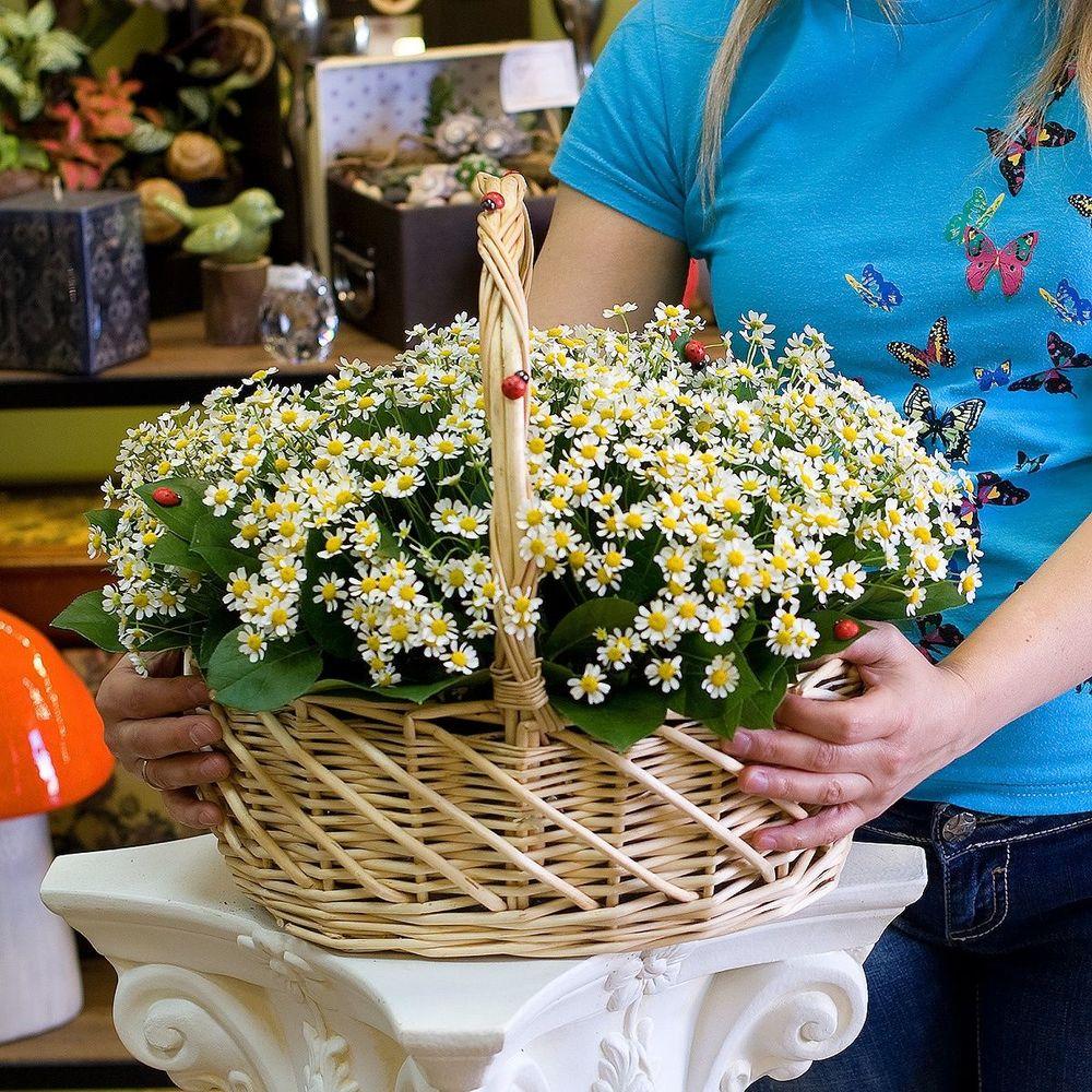 Доставка цветов в сша адресу киева