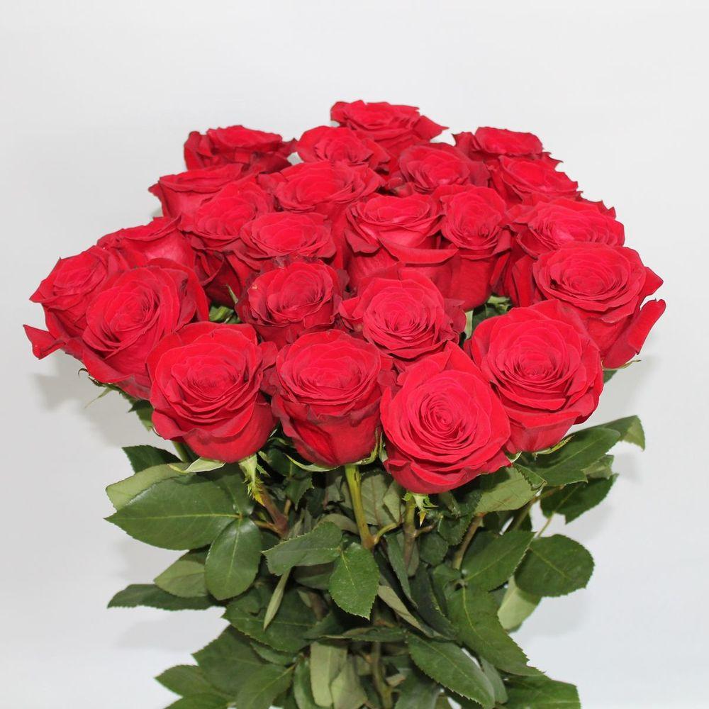 Роза фридом букет