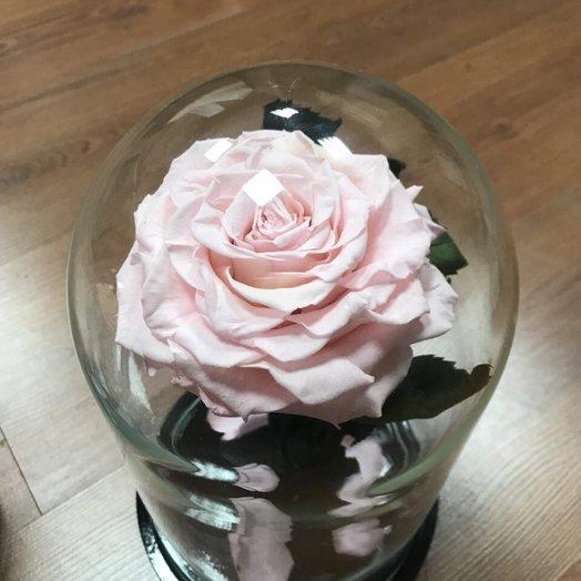 Розовая Роза в Колбе KING: букеты цветов на заказ Flowwow