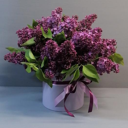 Ароматная сирень в шляпной коробке: букеты цветов на заказ Flowwow
