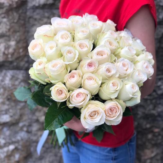 Сортовая Роза Альба
