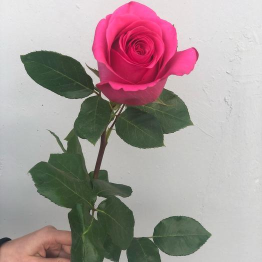 Розовая роза Premium 60 см (Эквадор)