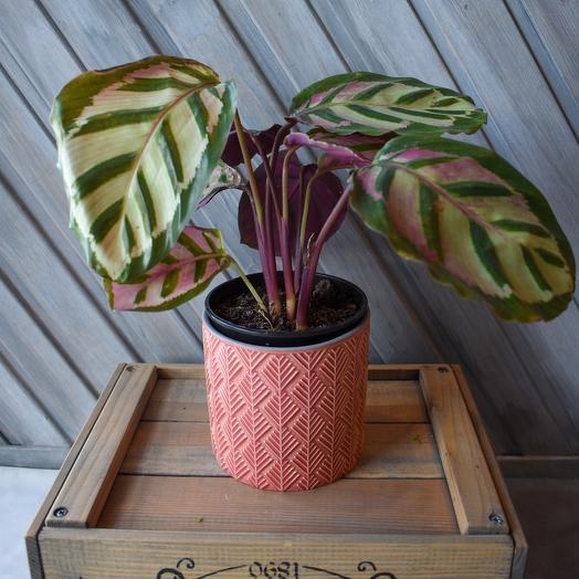 Комнатное растение5