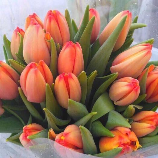 49 тюльпанов в букете