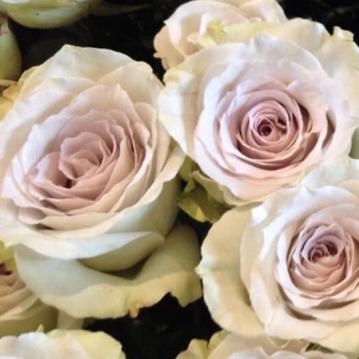 Лавандово-серебристые розы
