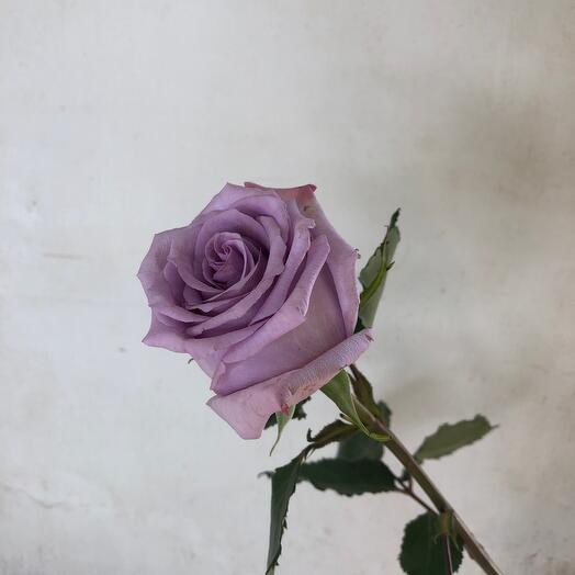 Роза Ocean 50 см