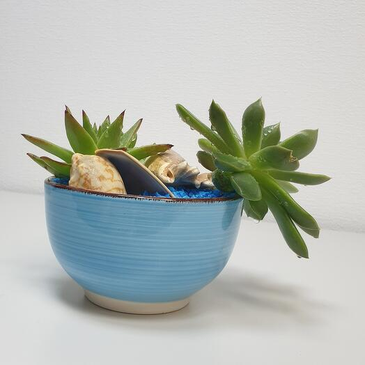 Суккуленты в керамический посуде 2.2