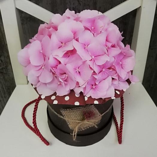 Гортензия в шоколаде: букеты цветов на заказ Flowwow