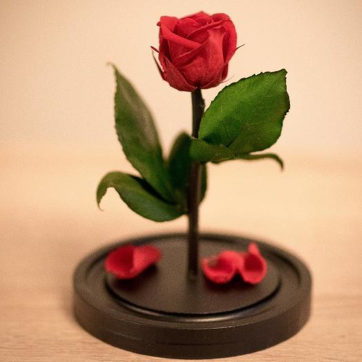 Роза в колбе Мини Мини красная: букеты цветов на заказ Flowwow