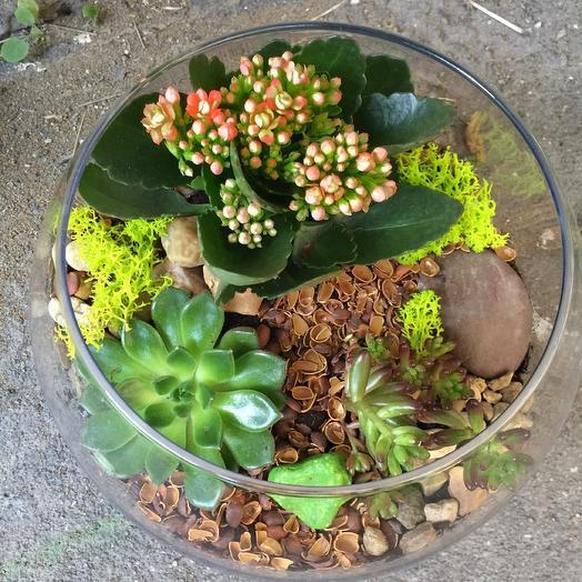 Флорариум «стильный мини Апельсинка»: букеты цветов на заказ Flowwow