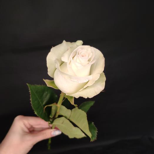 Роза Эквадор 40 см