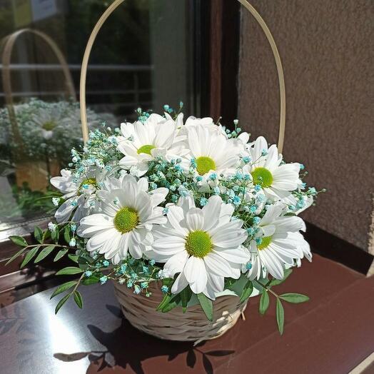 Белая хризантема в корзинке
