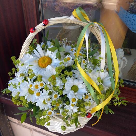 Корзина с цветами Моя единственная ромашка