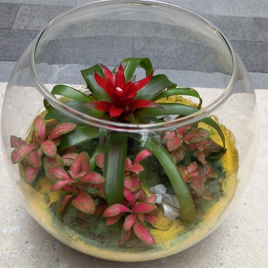 Флорариум с жиаыми растениями