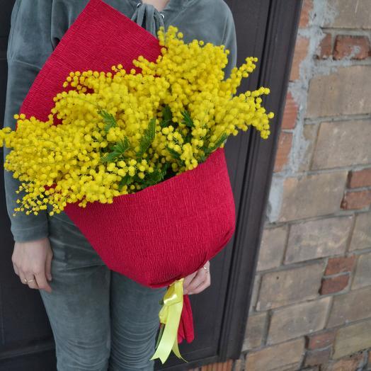 Мимоза прелестная: букеты цветов на заказ Flowwow