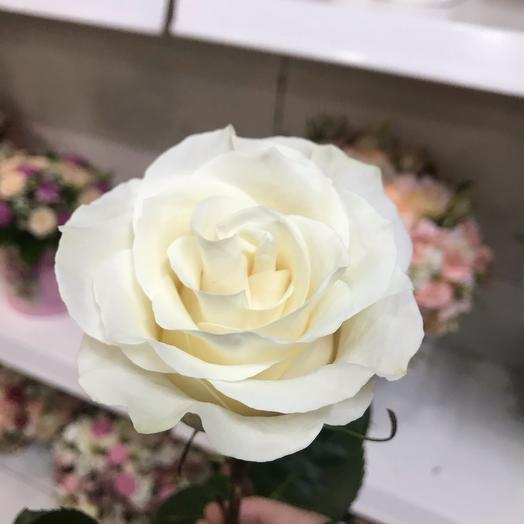 белая Роза (80 см)