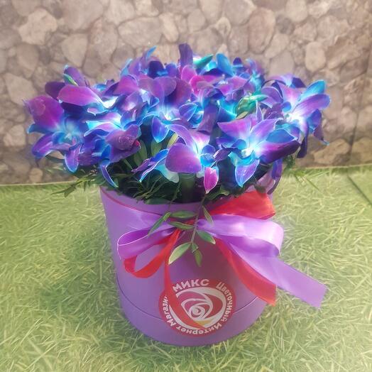 Орхидея синияя в коробке