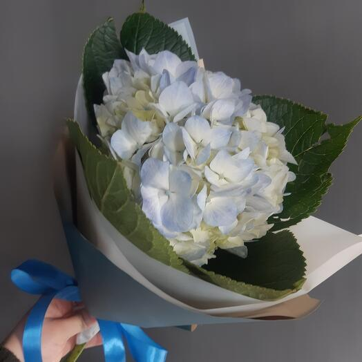 Голубая гортензия Mono