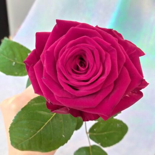 Роза бордо 70 см
