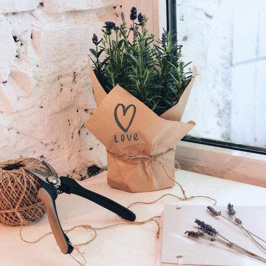 Нежная лаванда в крафте: букеты цветов на заказ Flowwow