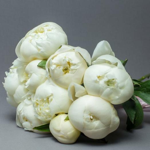 Букет из 9 белых понов: букеты цветов на заказ Flowwow
