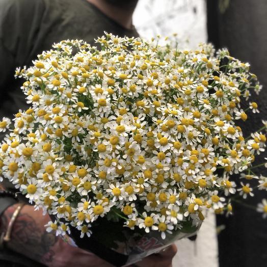 Танацетум: букеты цветов на заказ Flowwow