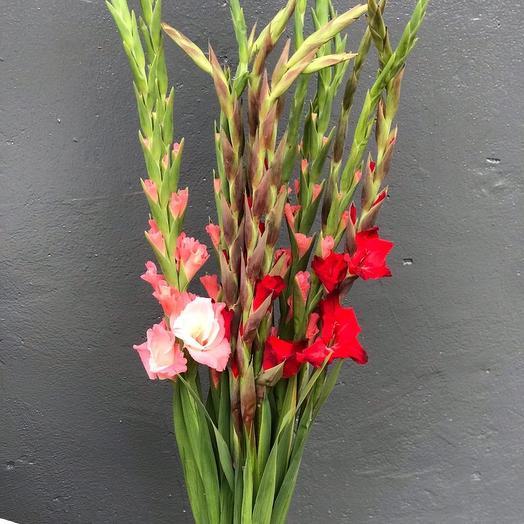 Элегантные Гладиолусы: букеты цветов на заказ Flowwow
