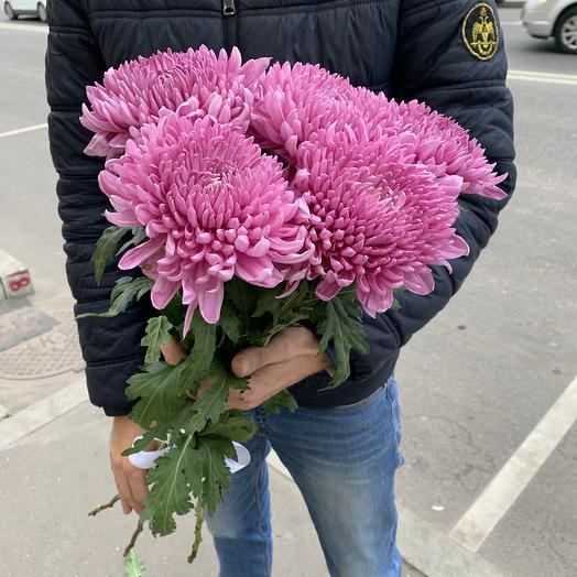 Букет из 5 фиолетовой шаровидных хризантем: букеты цветов на заказ Flowwow