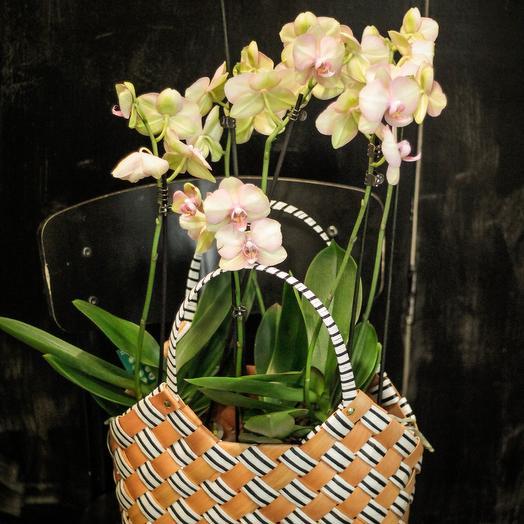 Сумка для Леди: букеты цветов на заказ Flowwow