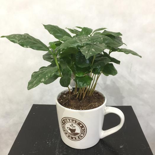 Кофе арабика в чашке: букеты цветов на заказ Flowwow