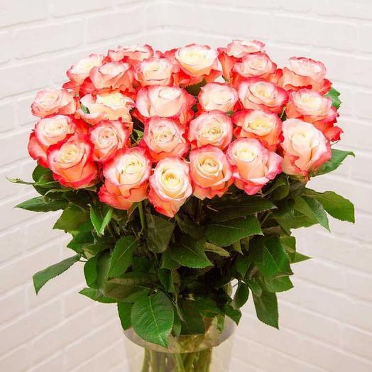 Роза Эквадор «Кабарет»