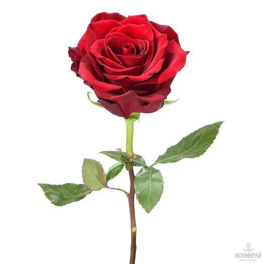 Красная роза 60 см