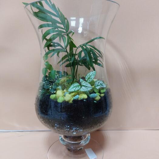 Хамедорея, фикус карликовый и гипоэстес в вазе