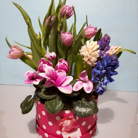 Весенняя полянка: букеты цветов на заказ Flowwow