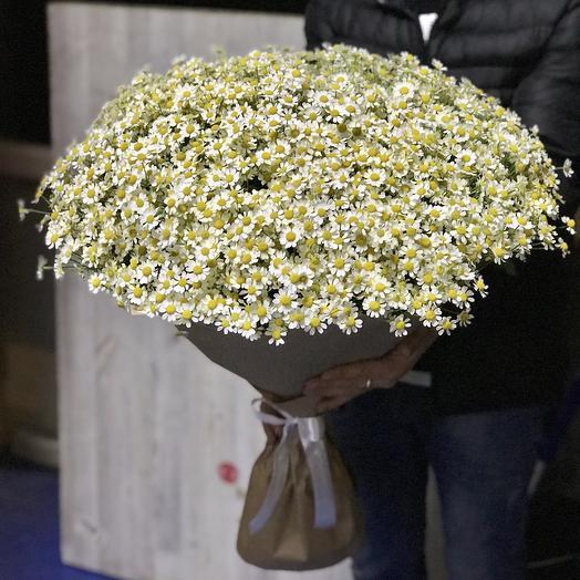 Большое ромашковое поле: букеты цветов на заказ Flowwow