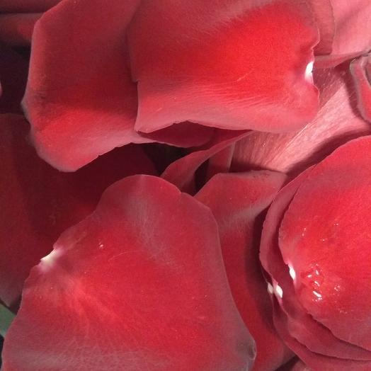Лепестки роз 10 литров: букеты цветов на заказ Flowwow