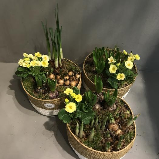 Композиция из цветущих луковичных растений: букеты цветов на заказ Flowwow