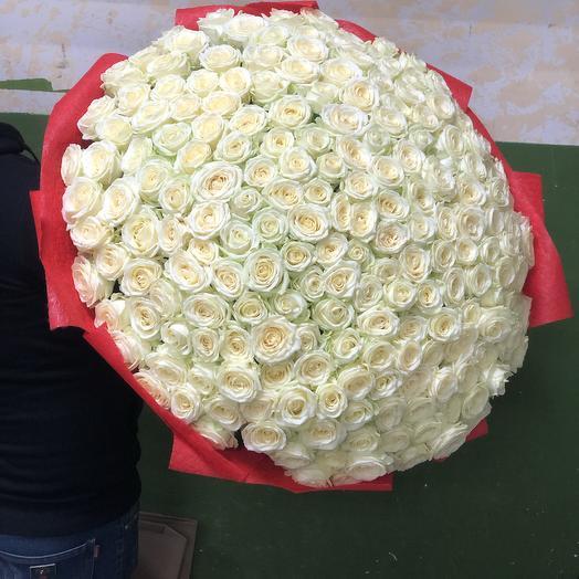 Белые розы в дизайнерской упаковке 201 Шт: букеты цветов на заказ Flowwow