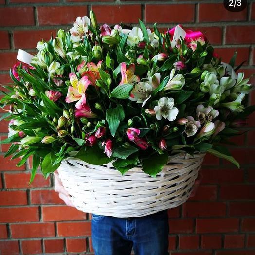 Basket with alstroemeria