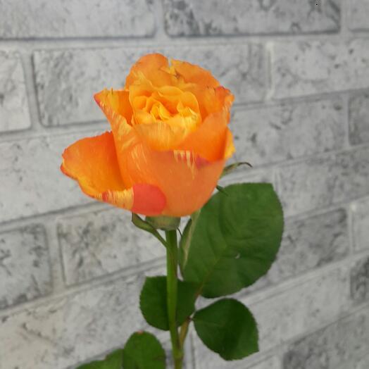 Роза оранжевая 40 см