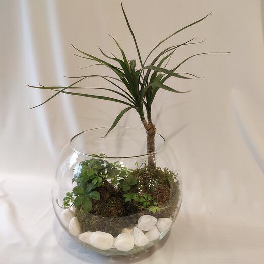 Флорариум Кокедамы в стеклянном шаре
