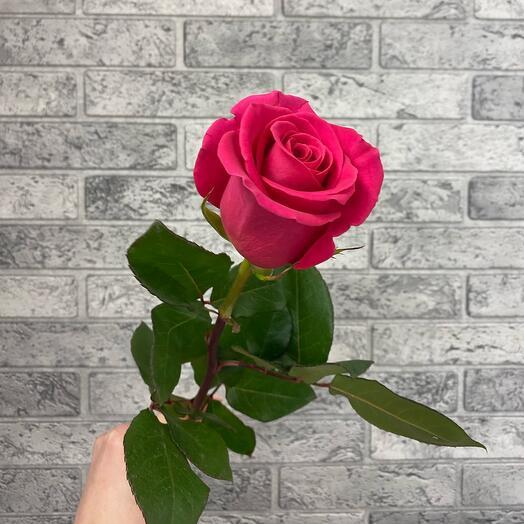 Роза VIP 60см Колумбия
