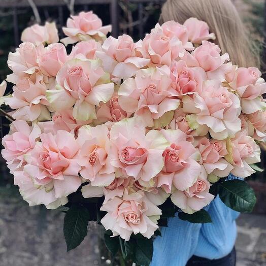 Розовые пчелки