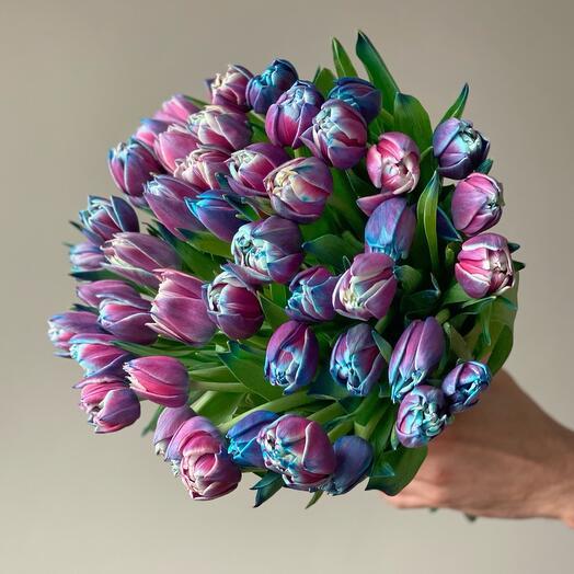 Пионовидные тюльпана Violet