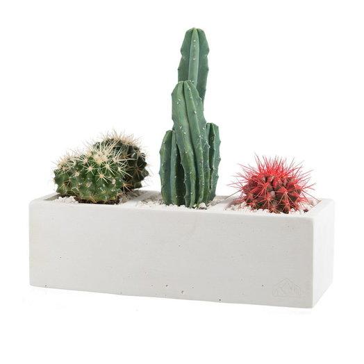 Бетонное кашпо с кактусами WHITE MIPIRA